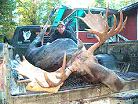 Mark Unger's nice Moose. 1020 lbs (field dressed) bull - 23 points and 60